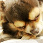 アレルギー体質の私が解説!犬アレルギーと猫アレルギー、違いは何?