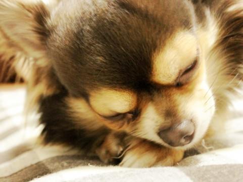 アレルギー体質の私が解説 犬アレルギーと猫アレルギー 違いは何