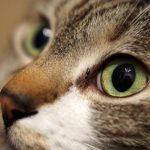 猫の夜行性を直すには?私が実際に試している方法を紹介します!