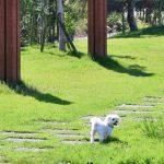ショパン『子犬のワルツ』難易度・弾き方・無料楽譜~ピアノ発表会で弾きたい!3つのコツを伝授