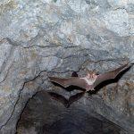 嫌われ者の金田一!?横溝正史・金田一耕助シリーズ「蝙蝠と蛞蝓」