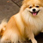 愛玩動物飼養管理士に受かった!私が実践した勉強方法を紹介します!