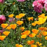 うっとりするほど美しい名曲ランゲ「花の歌」難易度と弾き方♪ピアノの発表会にもおすすめ!