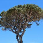 吹奏楽でも人気!もう一人の管弦楽の魔術師レスピーギの交響詩「ローマの松」名曲解説。松が見た悠久の古代ローマとは?トランペット超絶技巧曲!