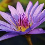 菅野よう子「花は咲く」のピアノ演奏の難易度はどのくらい?弾き方を解説!