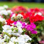 SMAP「世界に一つだけの花」の難易度は?ピアノの弾き方のコツを紹介します(作詞作曲:槇原敬之)
