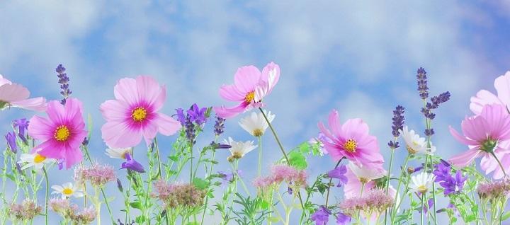 誰もが弾いてみたいと感じるランゲ「花の歌」の難易度と弾き方を解説!