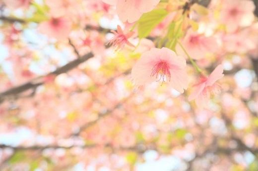 平井康三郎『幻想曲「さくらさくら」』の難易度と華麗な弾き方を解説